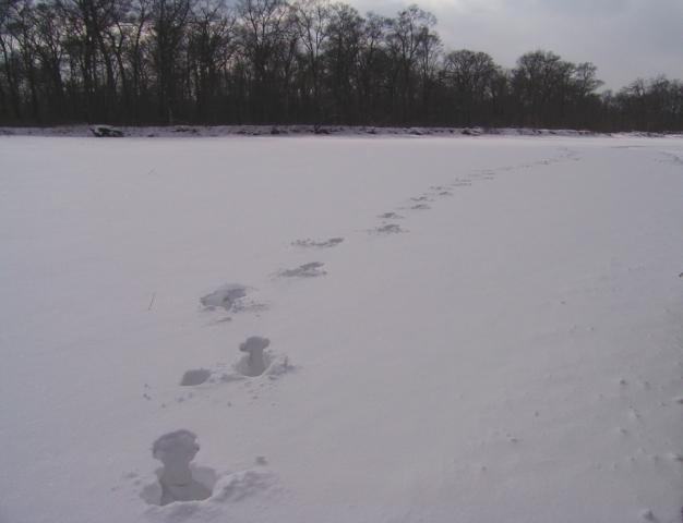 (アカシカの足跡) 凍ったビキン川に積もった雪の中を歩いていった一頭の足跡 (2005年2月 Caplio 400G wideで撮影)