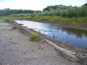 【PHOTO】 ユーラシアカワウソの足跡を見つけた夏のビキン川の川原、2005年8月 (クリックで拡大)