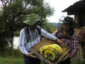 東洋ミツバチの自然巣を手にする銀座ミツバチプロジェクトの高安和夫さんと田中淳夫さん